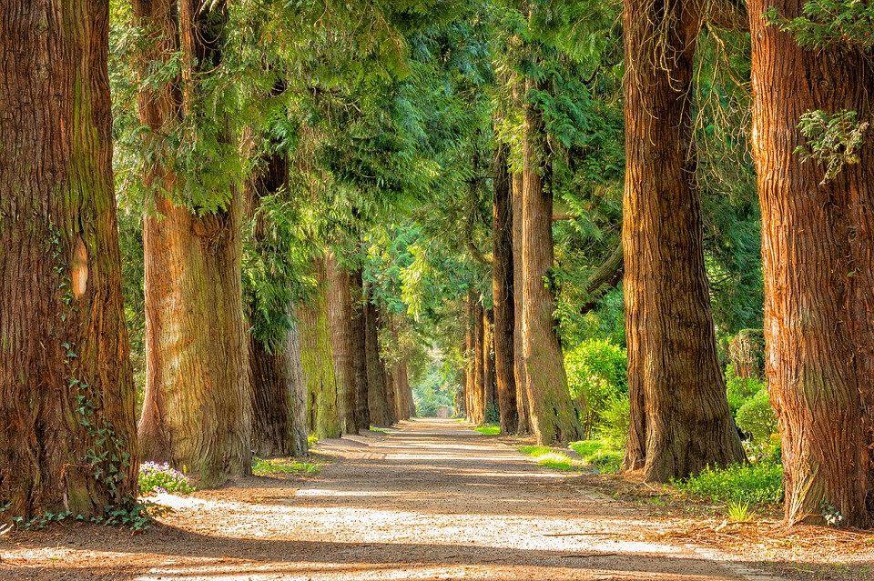 https://pixabay.com/en/avenue-trees-away-walk-green-2215317/